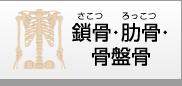 鎖骨・肋骨・骨盤骨